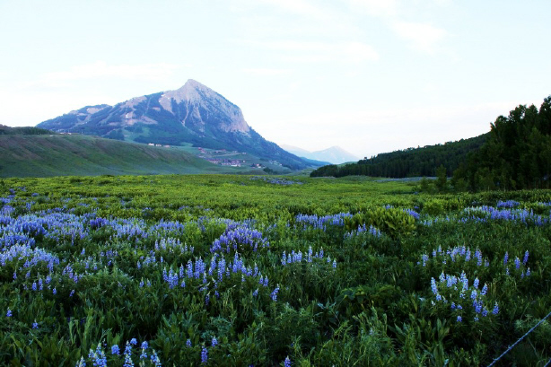 Alpine Express Crested Butte Jeep Tour