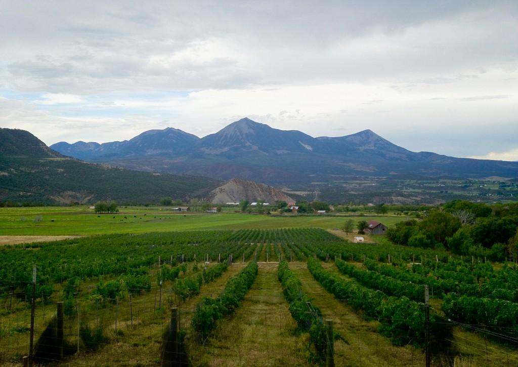 Colorado Wine Vineyard
